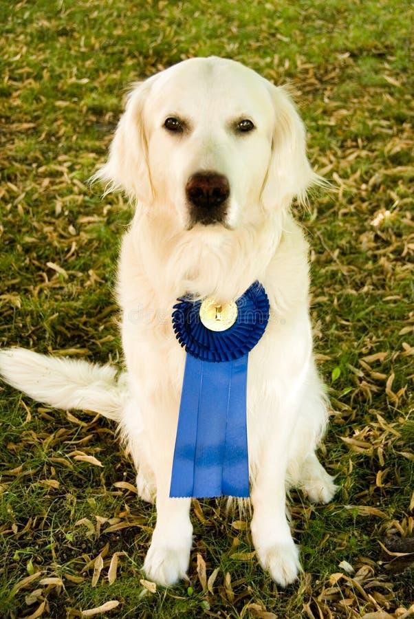 Perro del ganador imagen de archivo