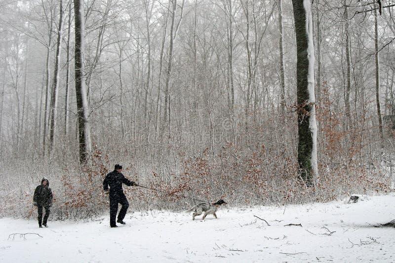 Perro del invierno fotos de archivo