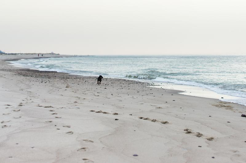 Perro del mar 2 fotos de archivo
