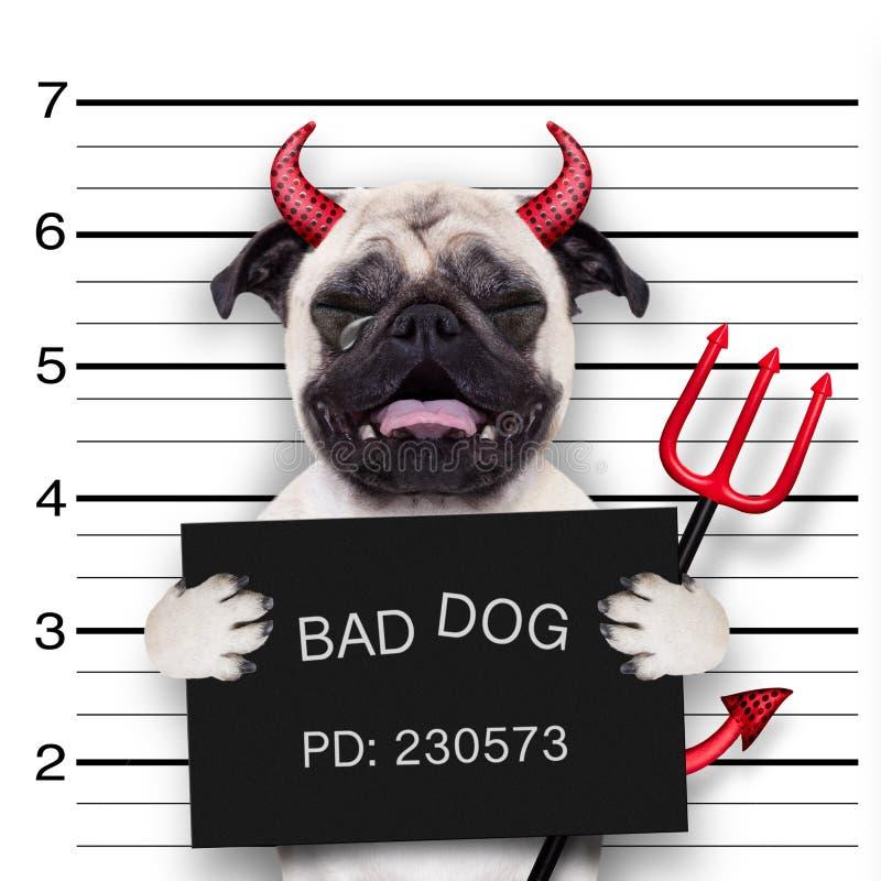 Perro del mugshot de Halloween foto de archivo libre de regalías