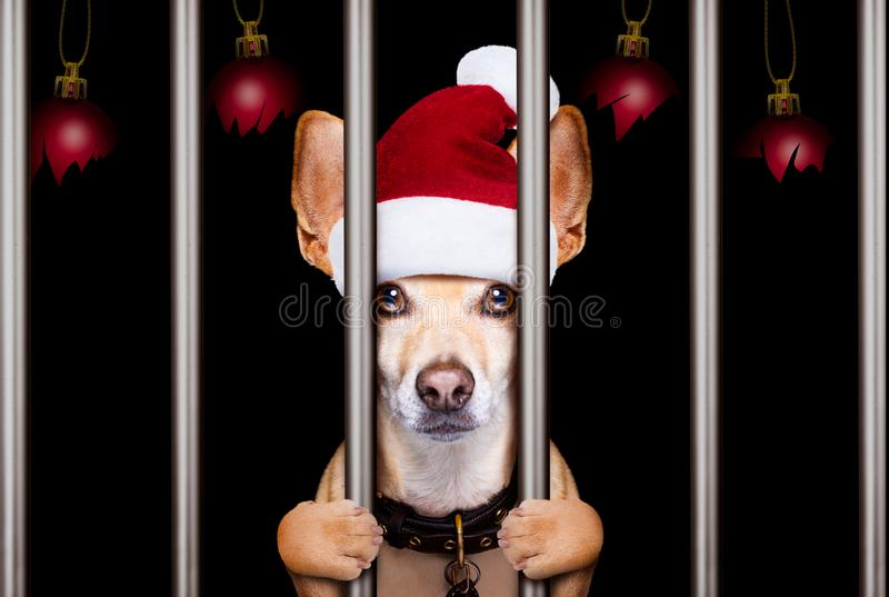 Perro del mugshot de la Navidad fotografía de archivo