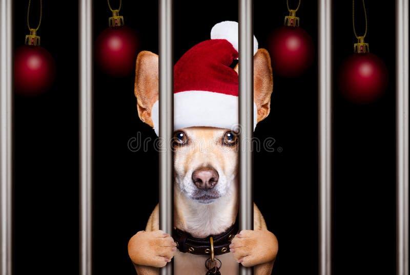 Perro del mugshot de la Navidad imagenes de archivo
