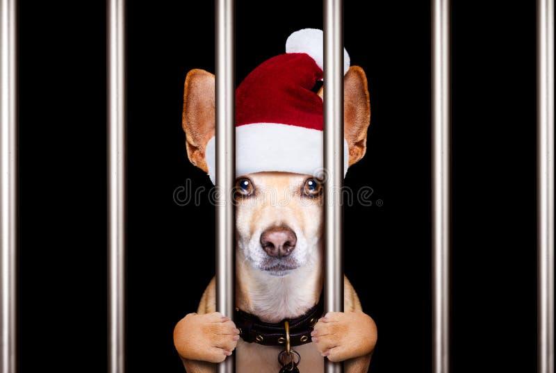 Perro del mugshot de la Navidad foto de archivo