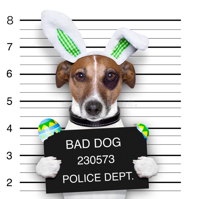 Perro del mugshot de Pascua imagenes de archivo