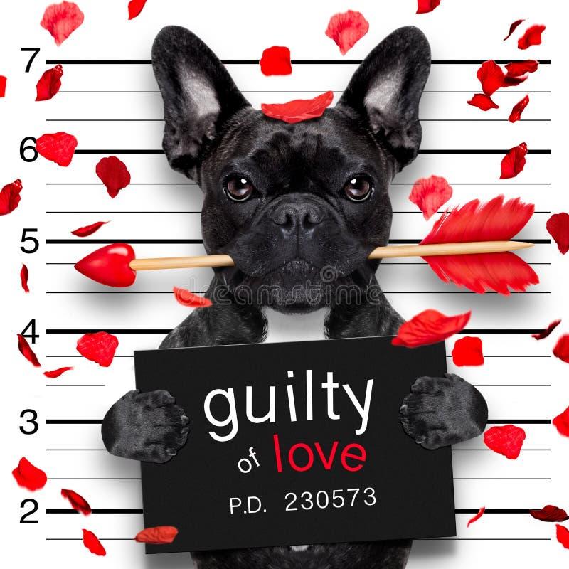 Perro del Mugshot en tarjetas del día de San Valentín fotografía de archivo libre de regalías