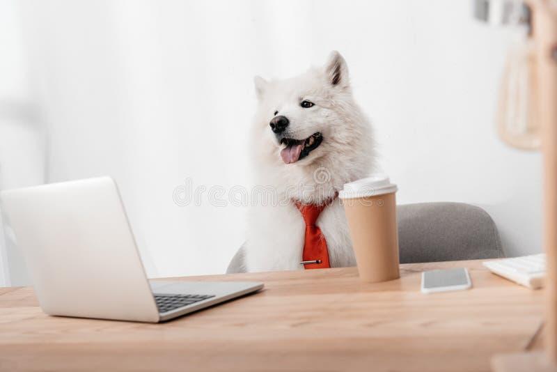 Perro del negocio con el ordenador portátil fotos de archivo libres de regalías