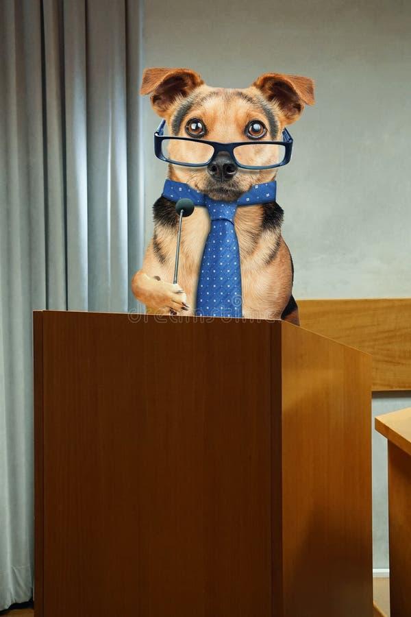 Perro del negocio que tiene discurso de público en el púlpito del podio con el micrófono fotos de archivo