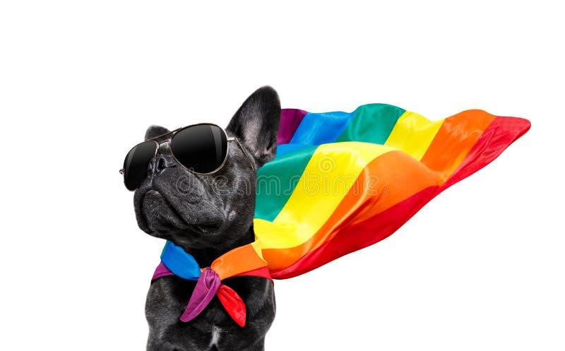 Perro del orgullo gay imagenes de archivo
