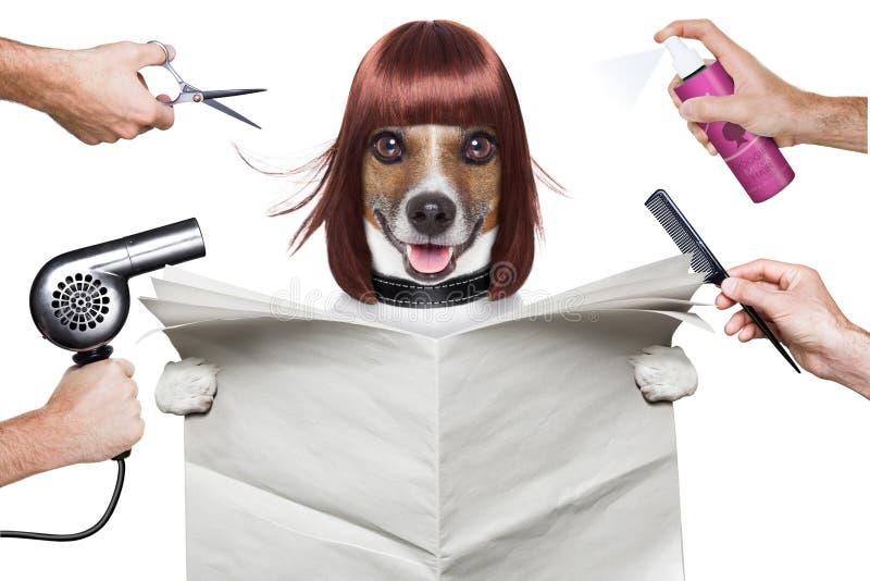 Perro del peluquero imagen de archivo
