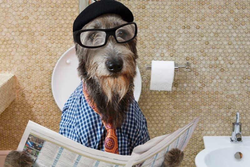 Perro del perro lobo irlandés en un retrete fotografía de archivo