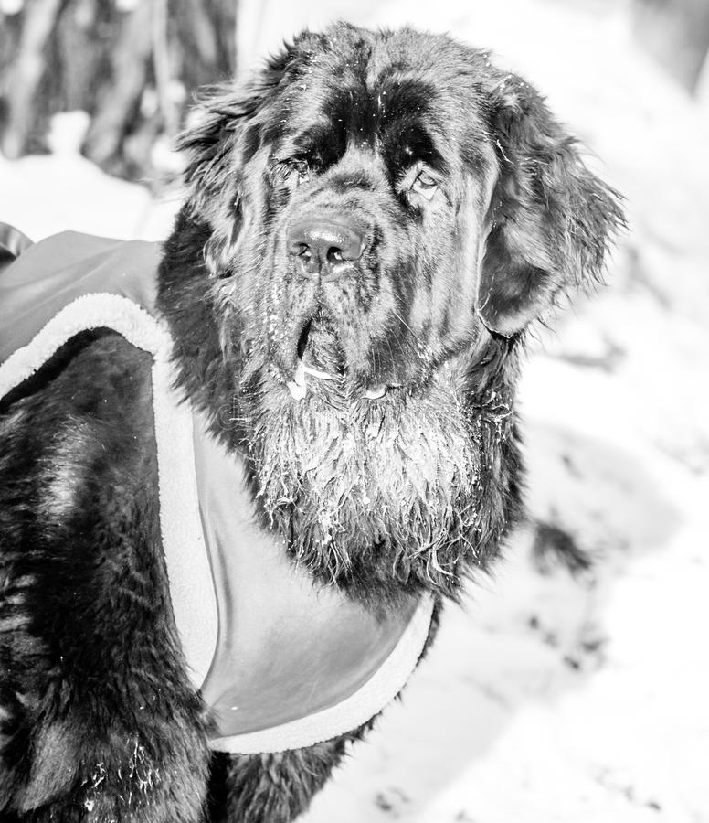 perro del primer en invierno fotos de archivo