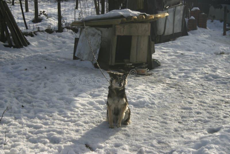 Perro del pueblo en nieve imagen de archivo libre de regalías