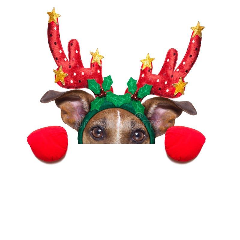 Perro del reno fotografía de archivo libre de regalías