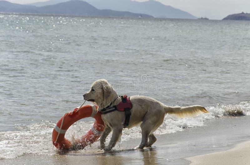 Perro del rescate con el flotador fotos de archivo