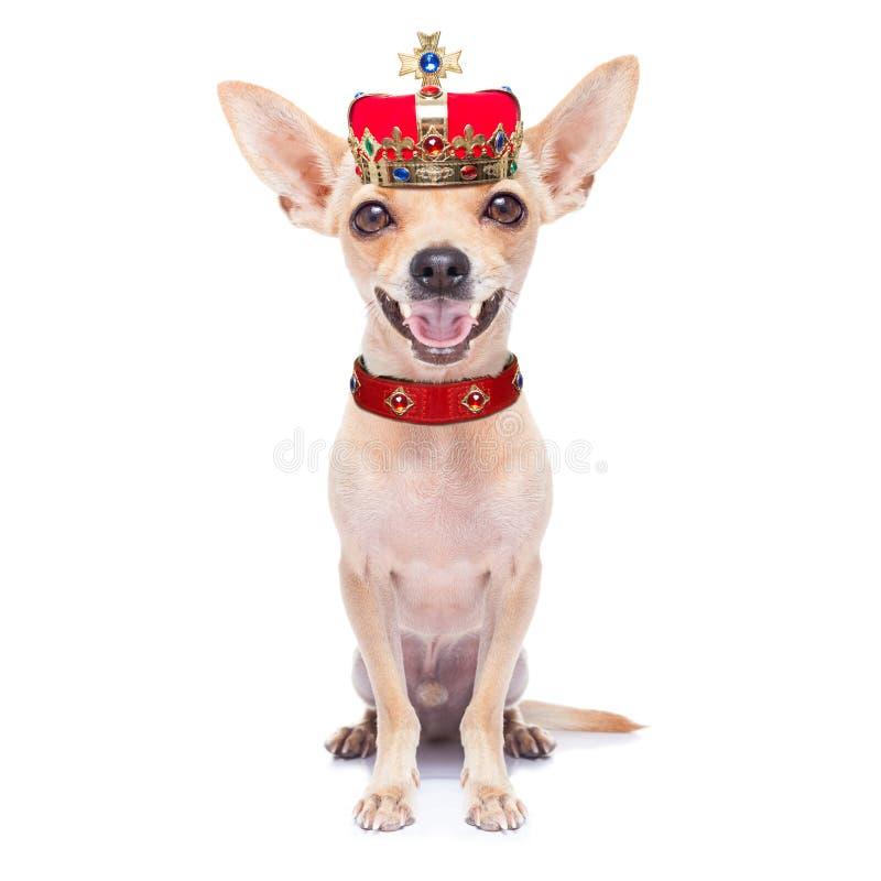 Perro del rey de la corona foto de archivo