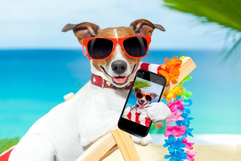 Perro del selfie del verano fotografía de archivo