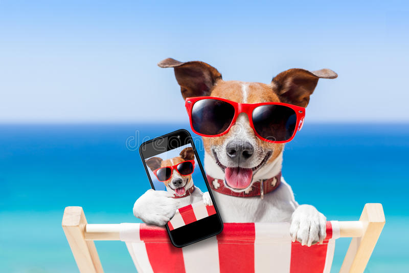 Perro del selfie del verano fotografía de archivo libre de regalías