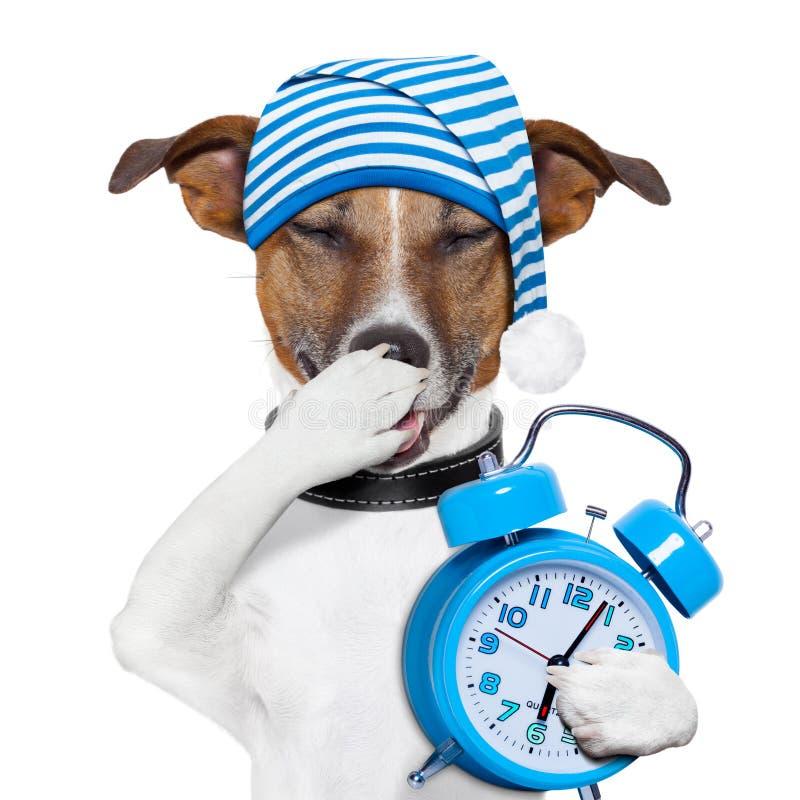 Perro del Sleepyhead cansado imagen de archivo