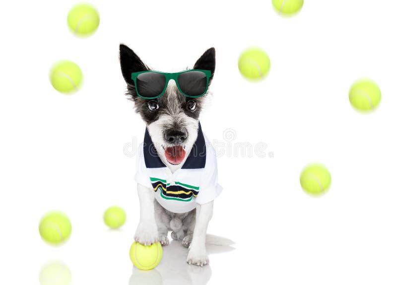 Perro del tenis con el dueño y la bola foto de archivo