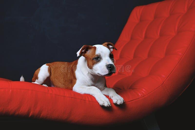 Perro del vector fotografía de archivo