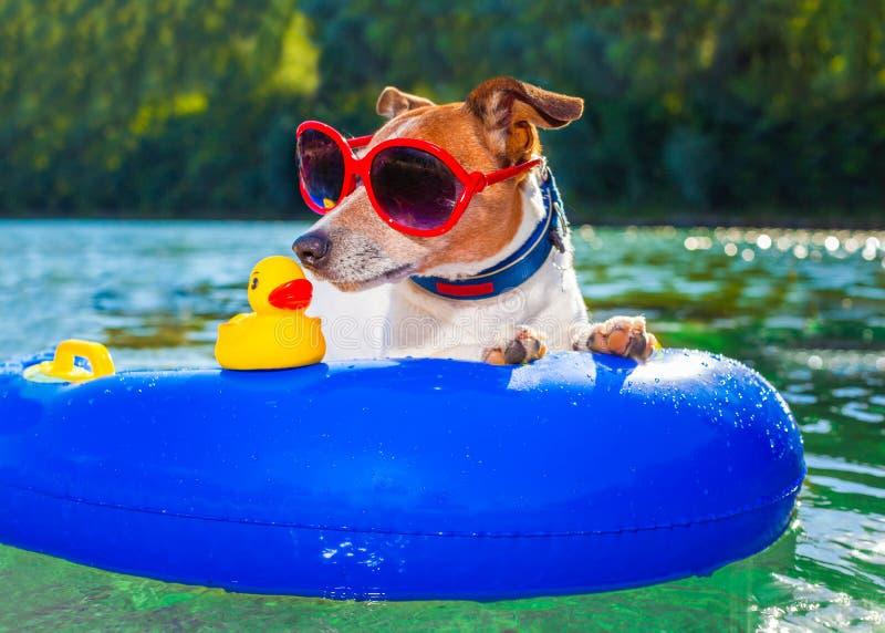 Perro del verano de la playa imagenes de archivo