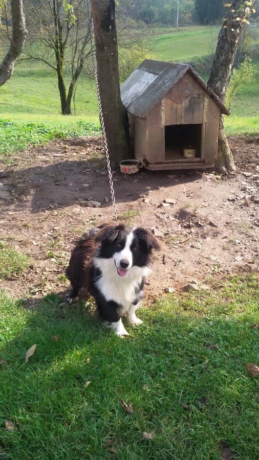 Perro delante de su casa imagenes de archivo