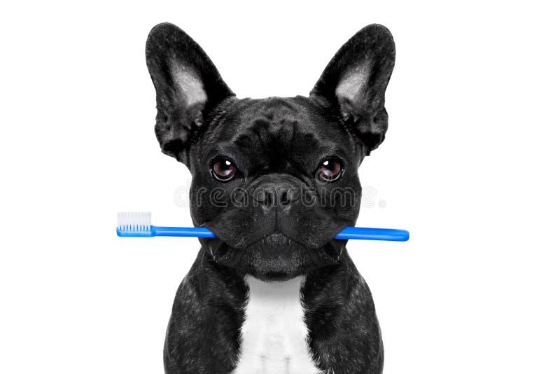 Perro dental del cepillo de dientes imagen de archivo