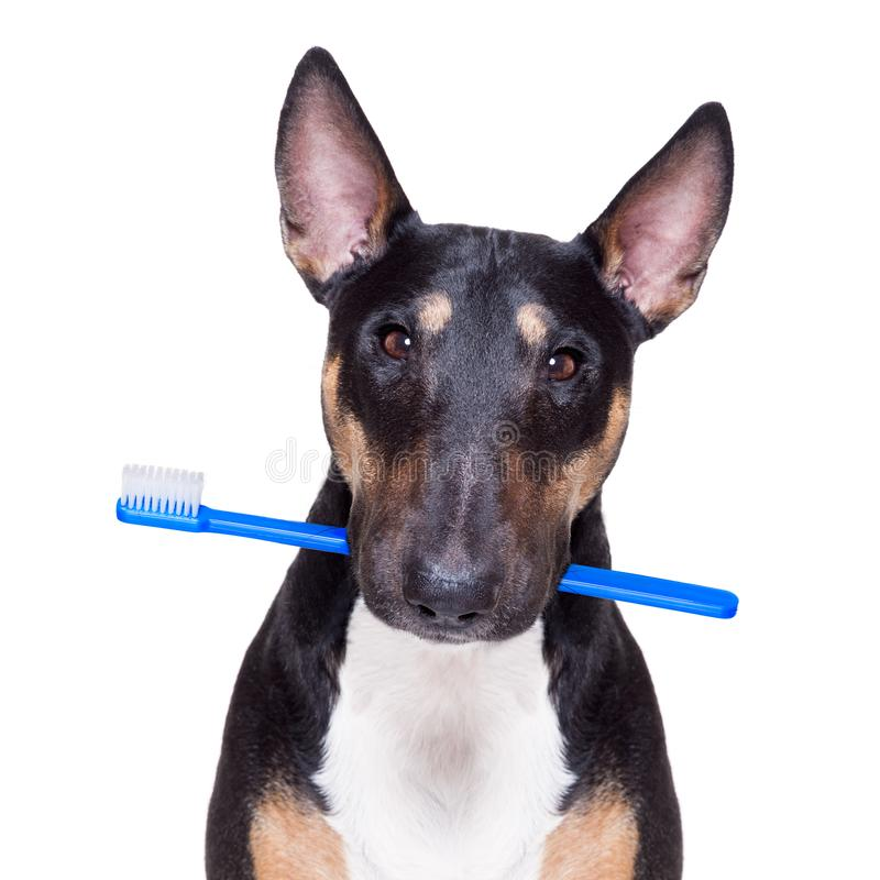 Perro dental del cepillo de dientes imagenes de archivo