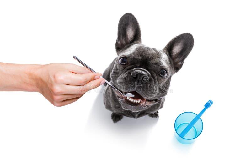 Perro dental del cepillo de dientes imagen de archivo libre de regalías