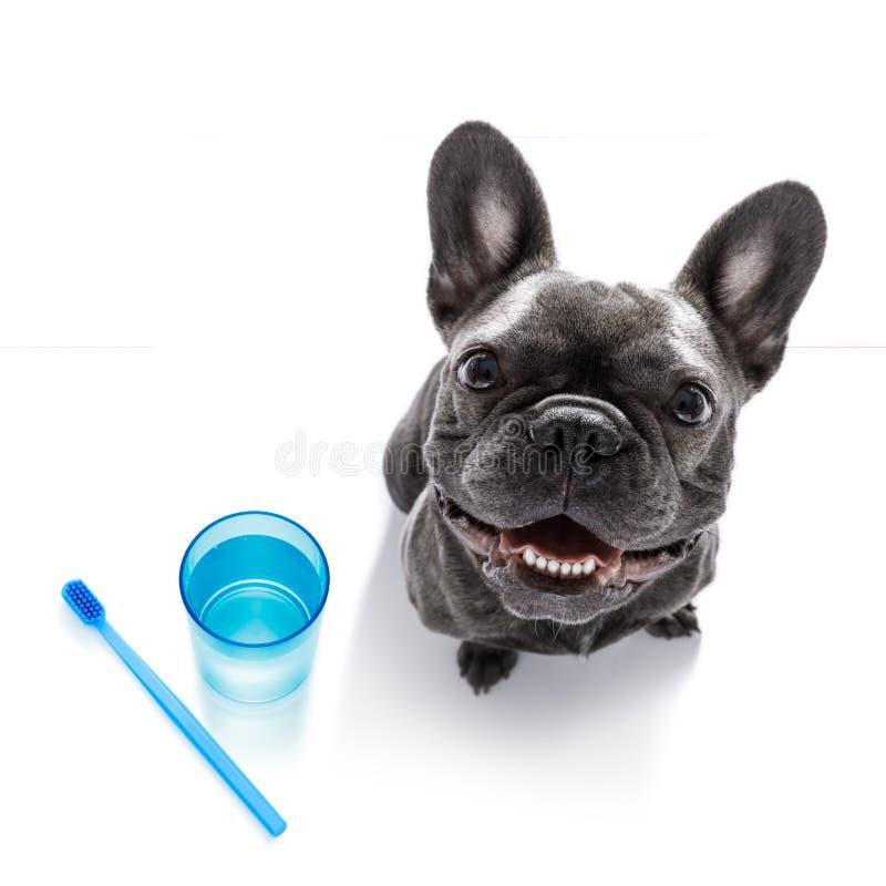 Perro dental del cepillo de dientes foto de archivo libre de regalías