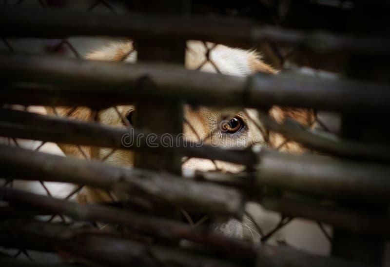 Perro detrás de una cerca imagenes de archivo