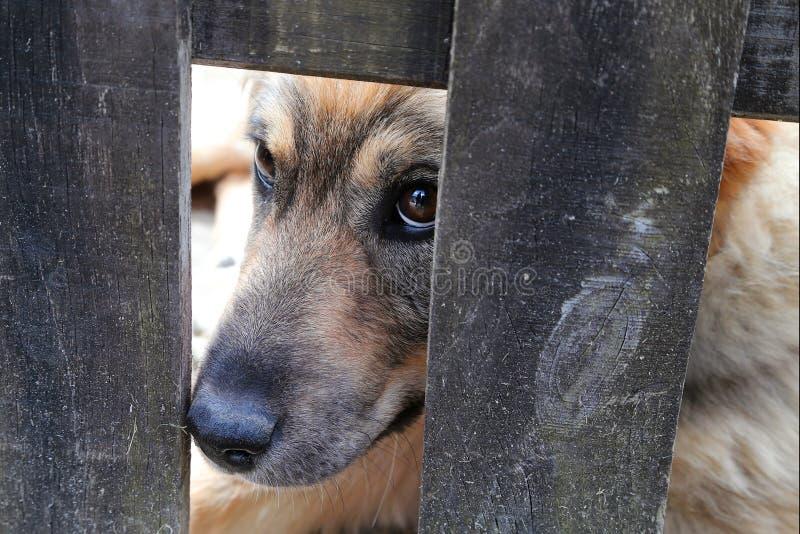 Perro detrás de una cerca en Altino Montemonaco imagen de archivo libre de regalías