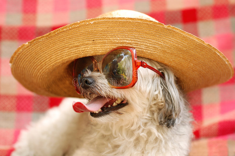 Perro divertido imágenes de archivo libres de regalías