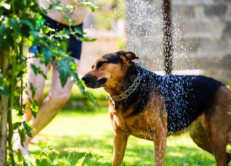 Perro divertido en hierba verde bajo descensos del agua foto de archivo libre de regalías