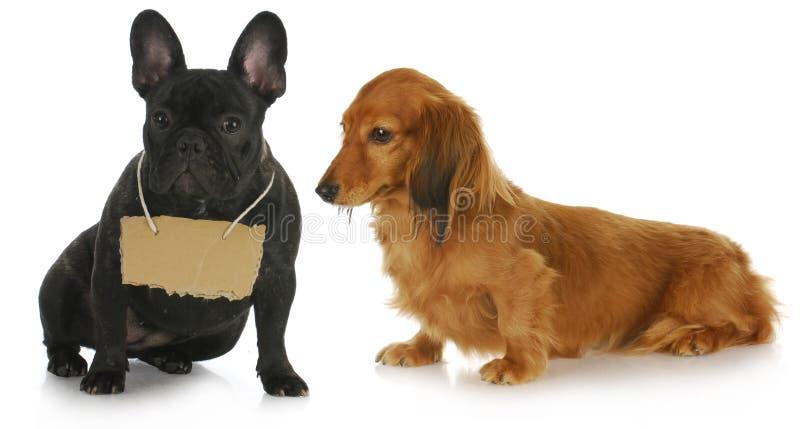 Perro dos con un mensaje fotos de archivo libres de regalías