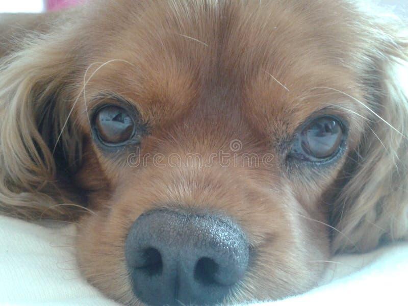 Perro dulce fotos de archivo libres de regalías