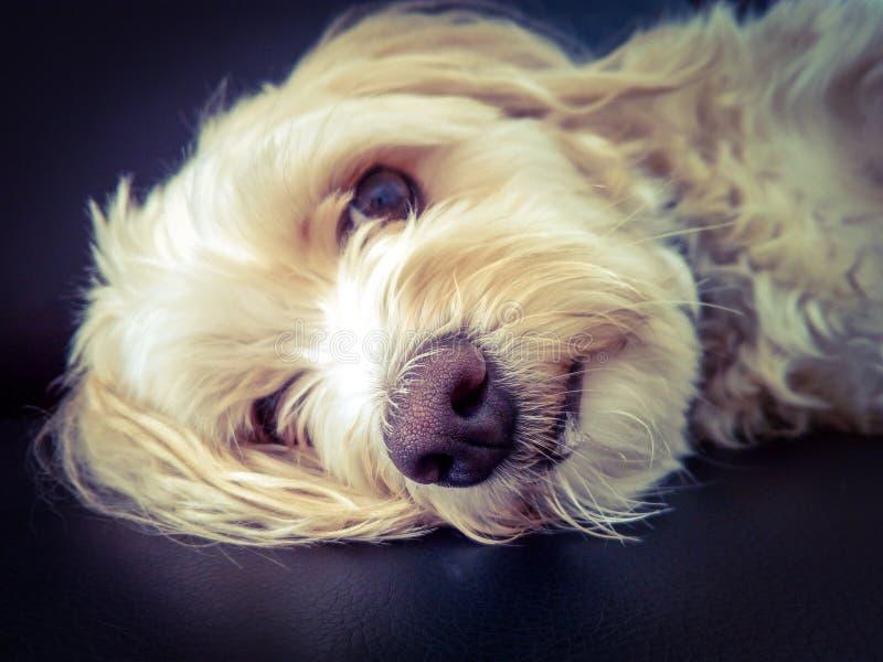 Perro dulce imágenes de archivo libres de regalías