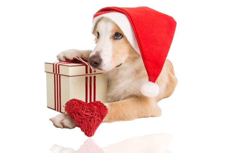 Perro dulce de Santa Claus por tiempo de Navidad foto de archivo libre de regalías