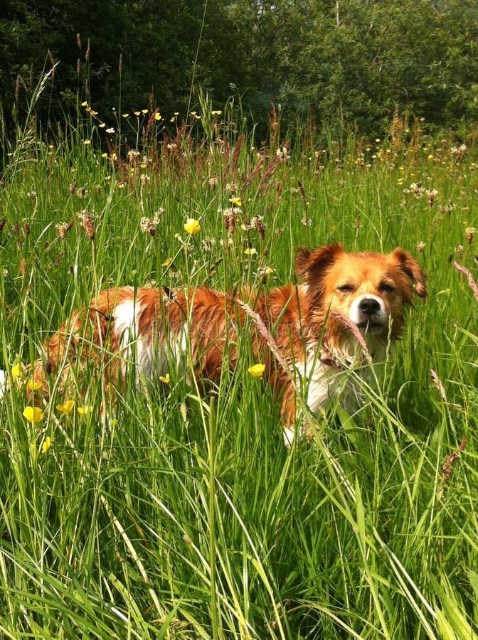 Perro dulce en la hierba imagen de archivo
