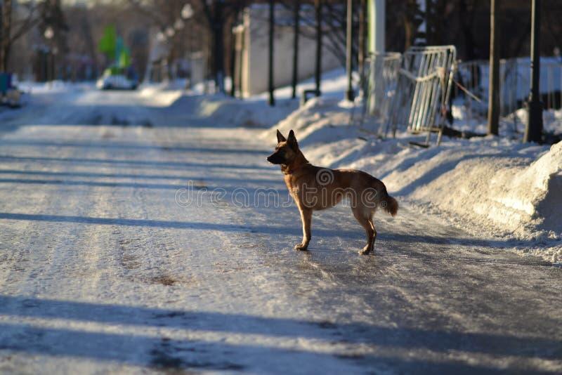 Perro e invierno foto de archivo