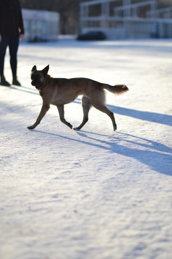 Perro e invierno imagen de archivo