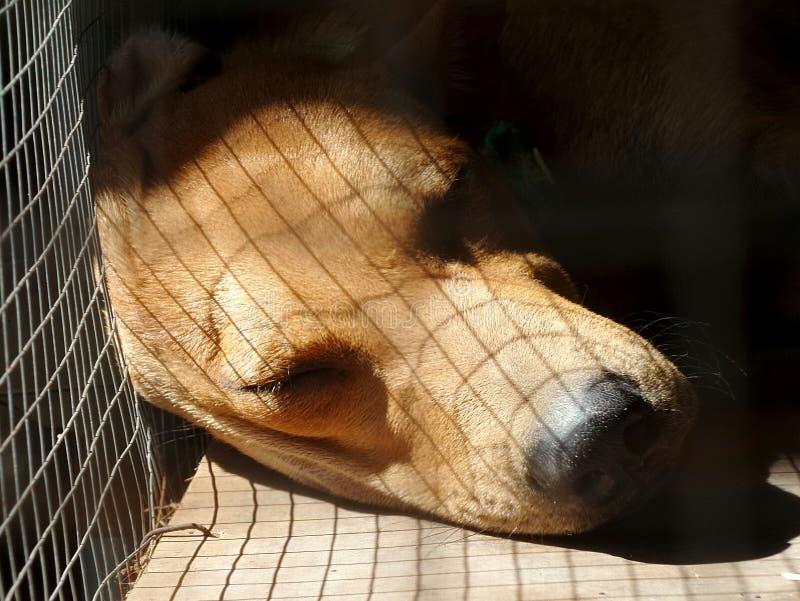 Perro el dormir en jaula foto de archivo libre de regalías