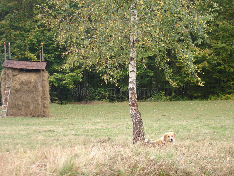 Perro el dormir en los Cárpatos ucranianos imagen de archivo