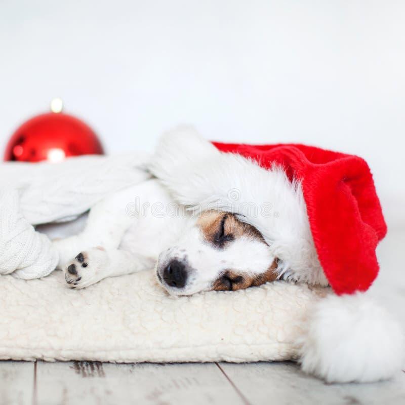 Perro el dormir en sombrero de la Navidad imagenes de archivo