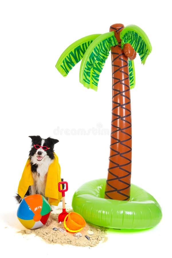 Perro el vacaciones en la playa tropical imagen de archivo libre de regalías
