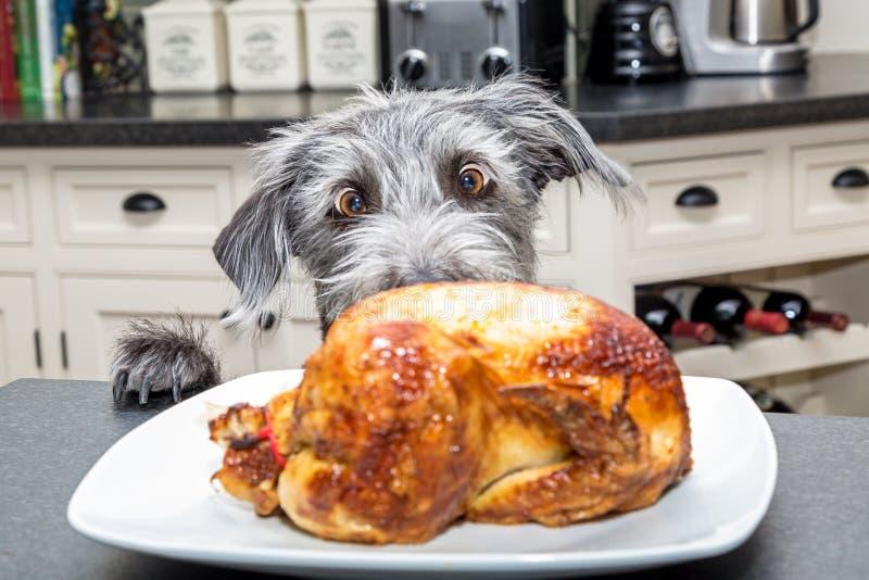 Perro emocionado divertido que roba la comida del contador fotos de archivo libres de regalías