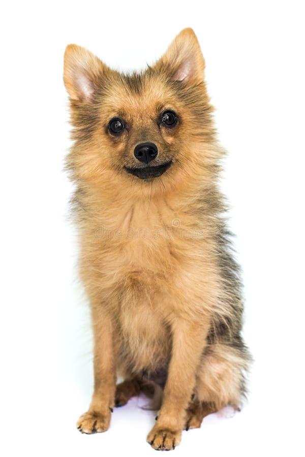 Perro en blanco fotografía de archivo