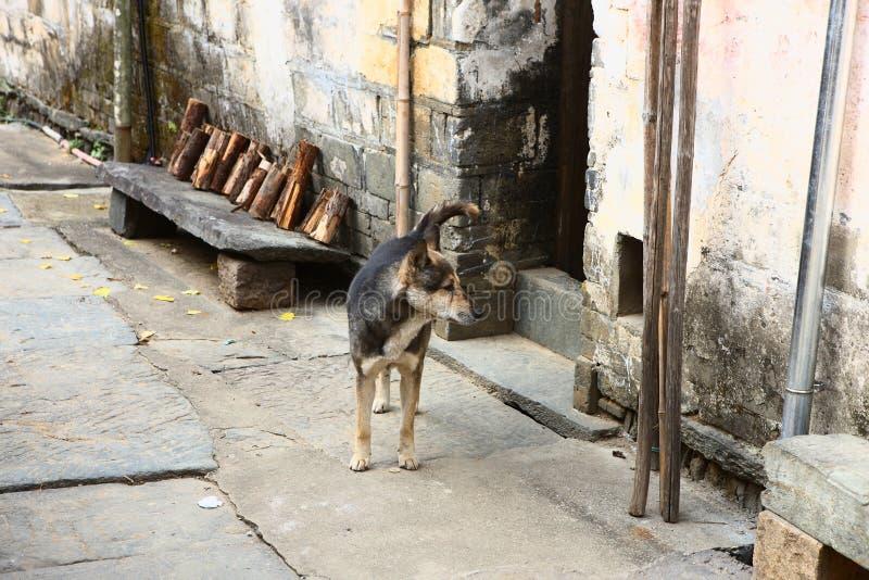 Perro en calle china del pueblo imagenes de archivo