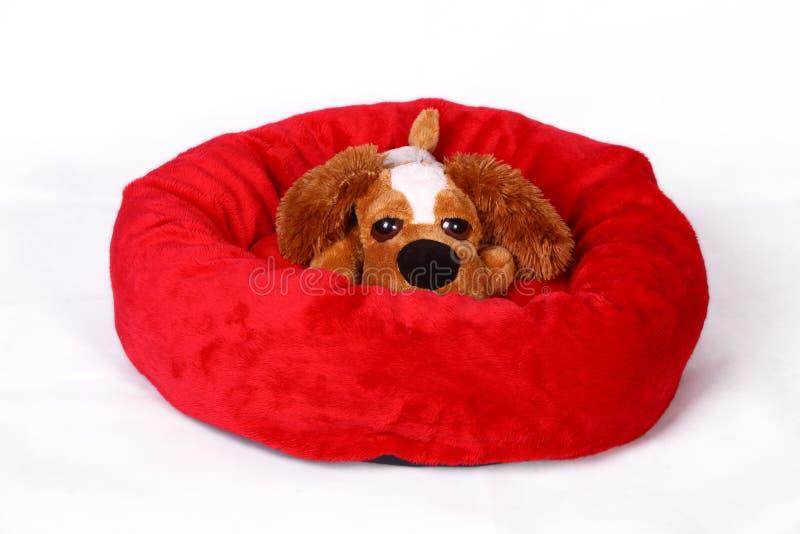 Perro en cama fotos de archivo
