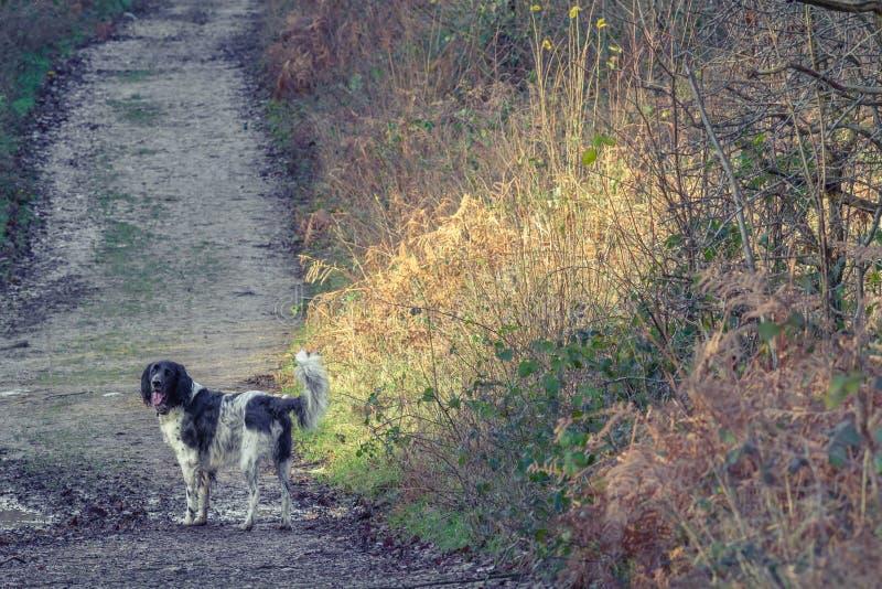 perro en carril foto de archivo libre de regalías